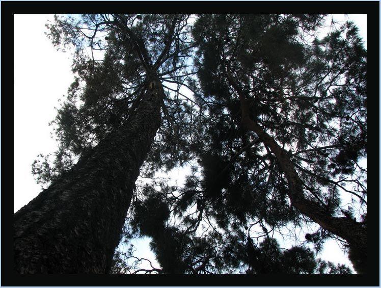 tree & sky