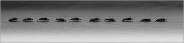 Fishingflyes