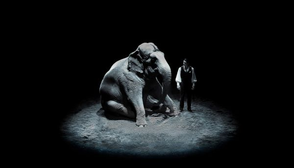 The elephant & the man