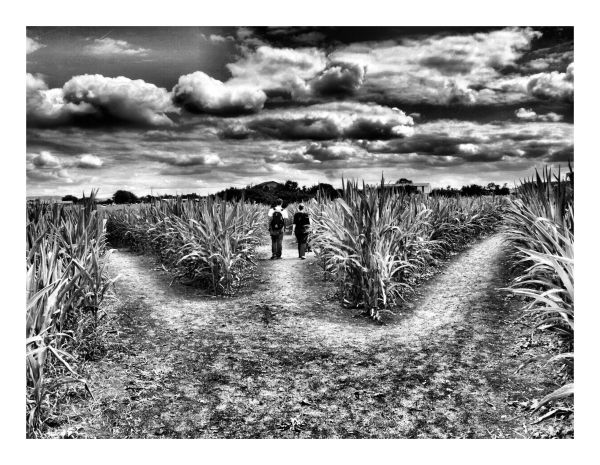 Le labyrinthe de la vie