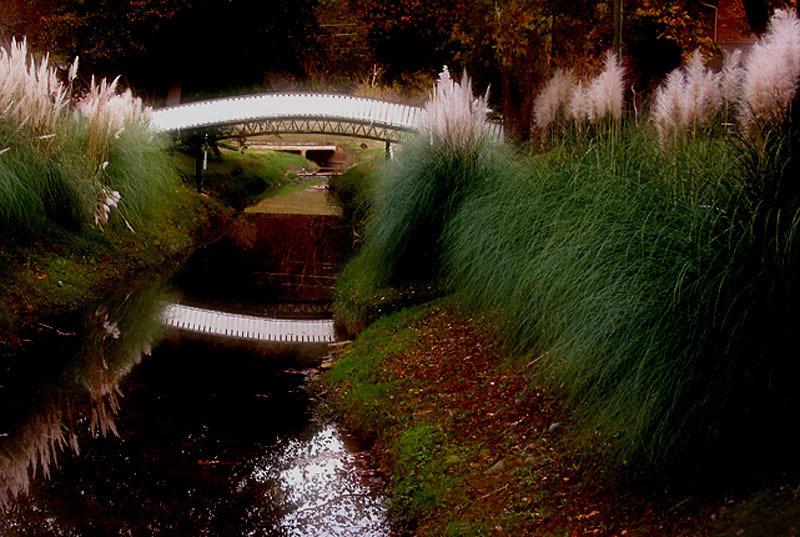 Soft Focus Bridge