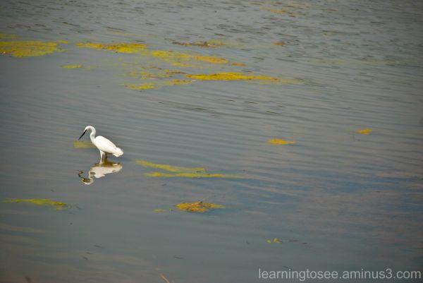 Crane, Fishing