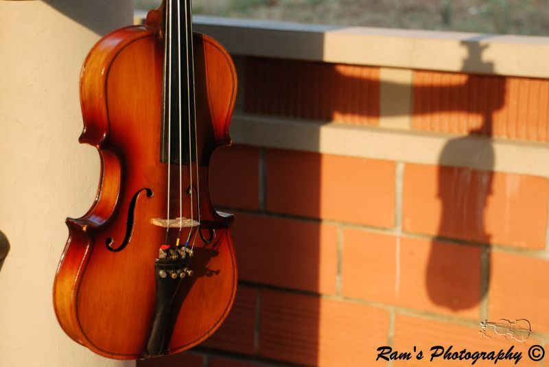 Violin and Its Shadow