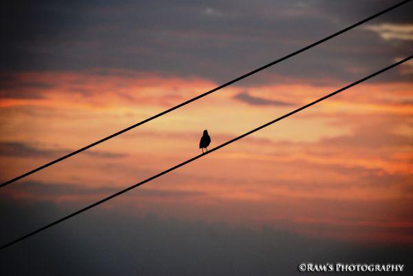 Waitng for the sunrise