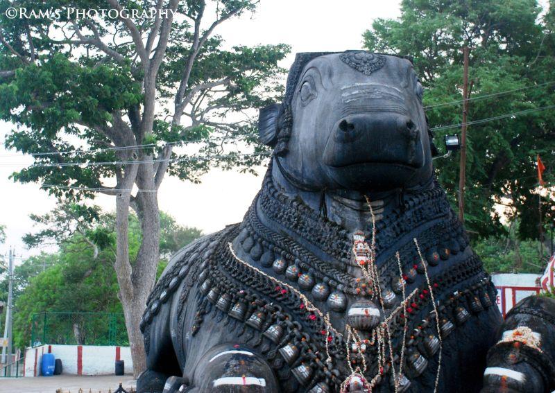 Nandi! Monolithic rock sculpture, Mysore