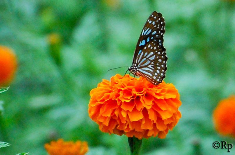 Colour Fly 2...