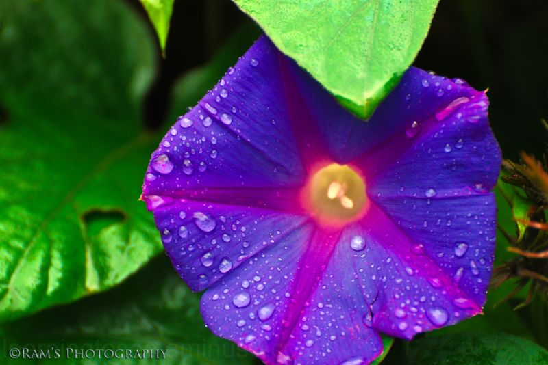 Purple maze....
