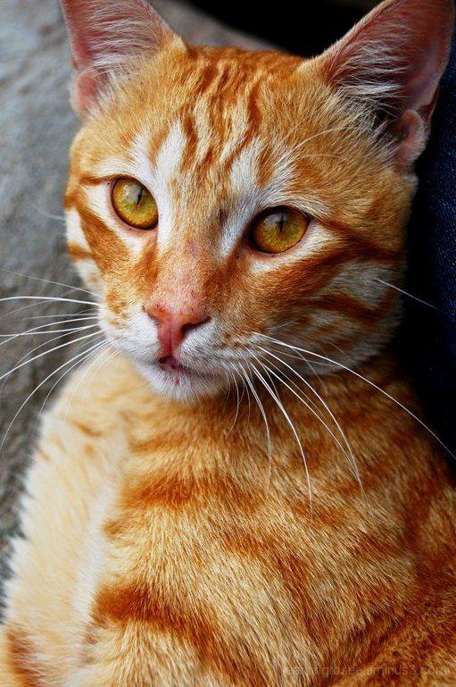 Kitty..... Striking a pose...