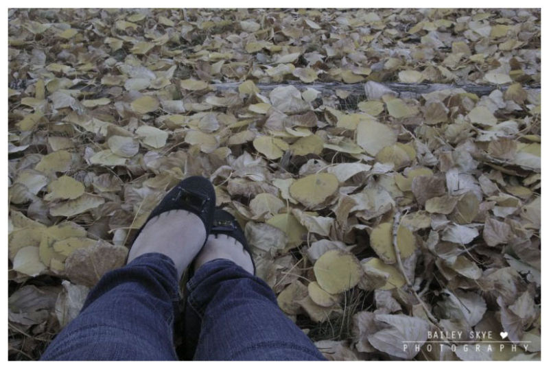 Baileys Feet In A Pile Of Leaves