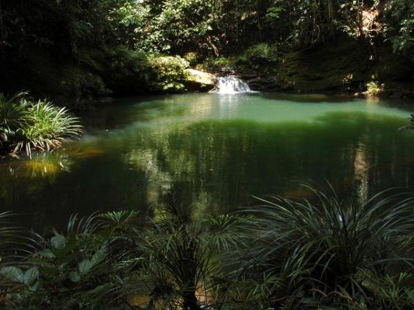 Borneo Tropical Rainforest