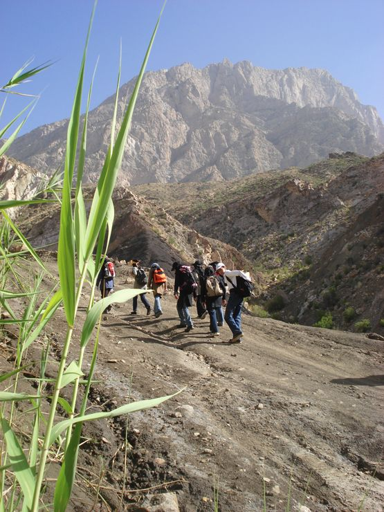 Climbing Hemag In Hormozgan Province