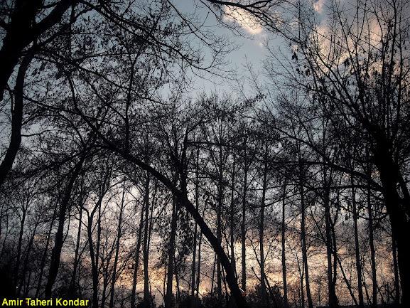 Park-e-Mellat Mashad