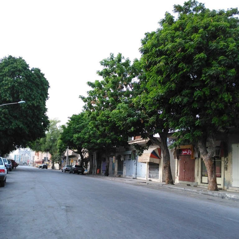 South Bahador St. of Bandar-e-Abbas