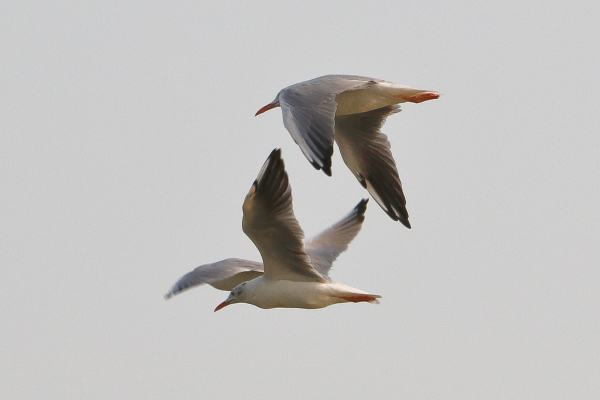 Fly of Birds