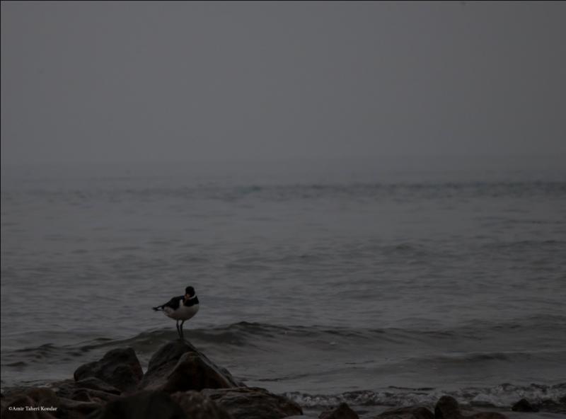 Hormoz Island - Bird