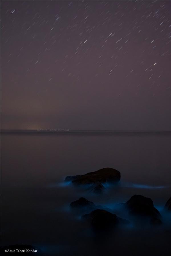 Phytoplankton in Hormoz Island