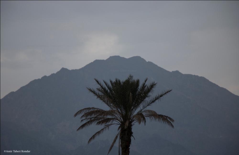 Palm Tree and Gorom Mount