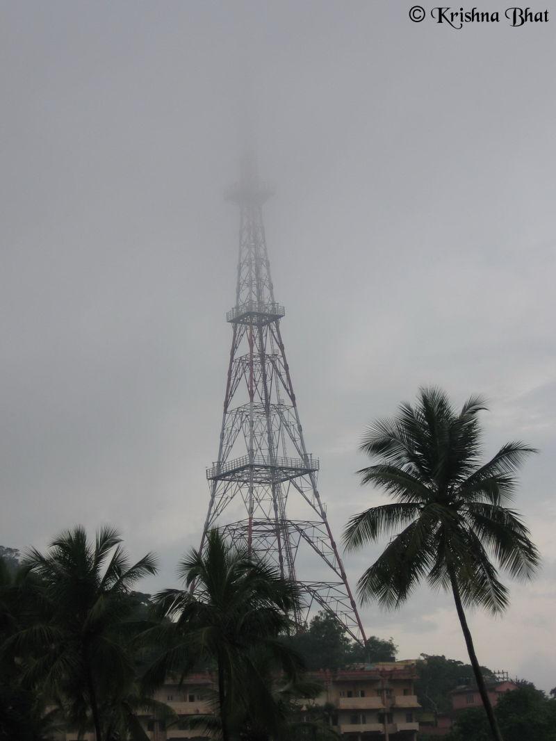 Electric Pole, Coconut Tree