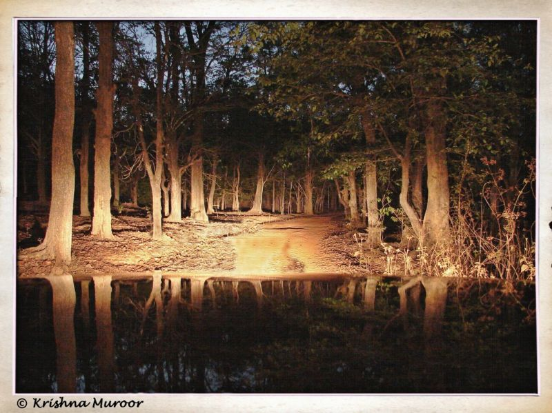 Reflection of woods