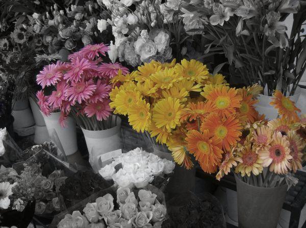 Gerbera daisys at a flower market