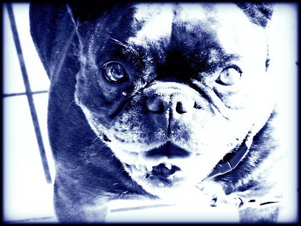 Blue l'dog !