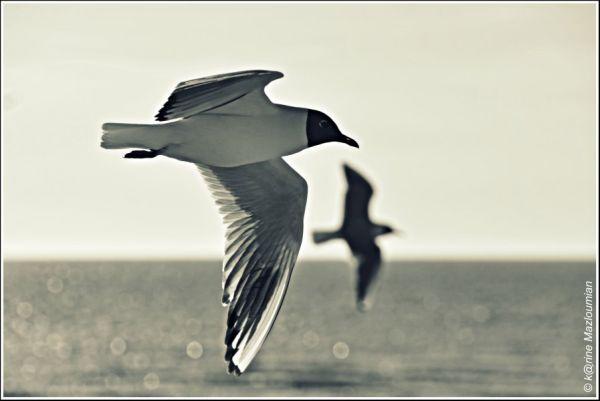 Parade du 14 juillet > Brigade des oiseaux côtiers