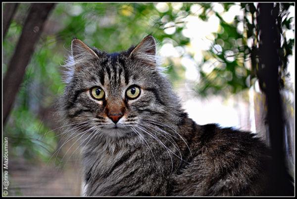 Profondeur de chat & de champ