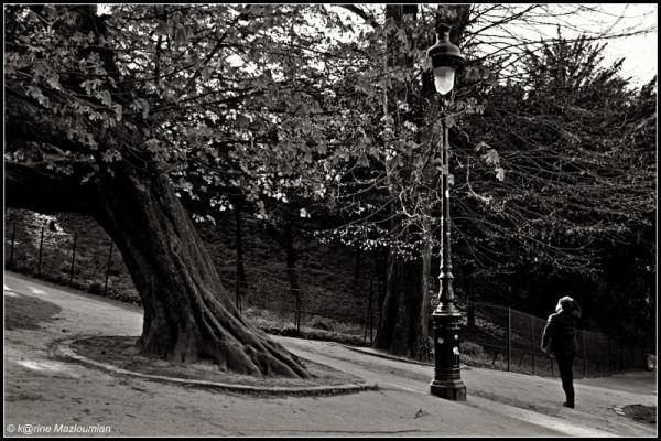 La sagesse de l'arbre mouvant