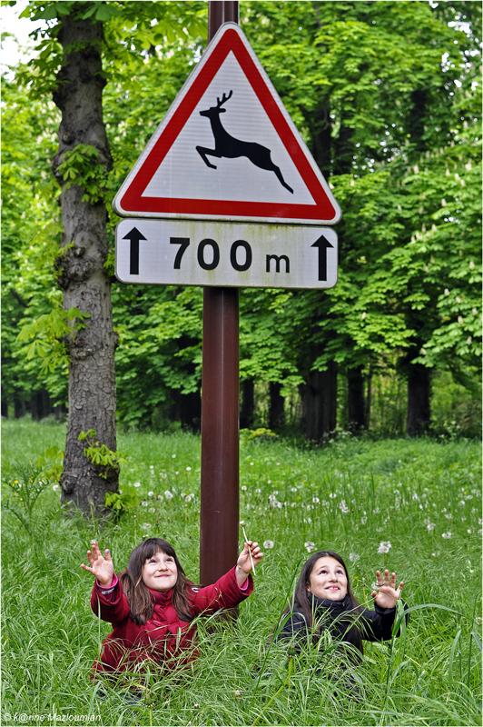 Attention, traversée d'animaux réj⊙uissants