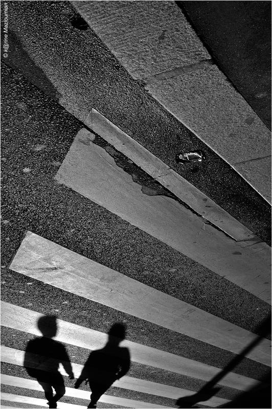 Aux zèbres de l'asphalte