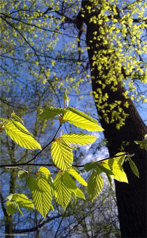 Sous le charme des verts frissons d'avril