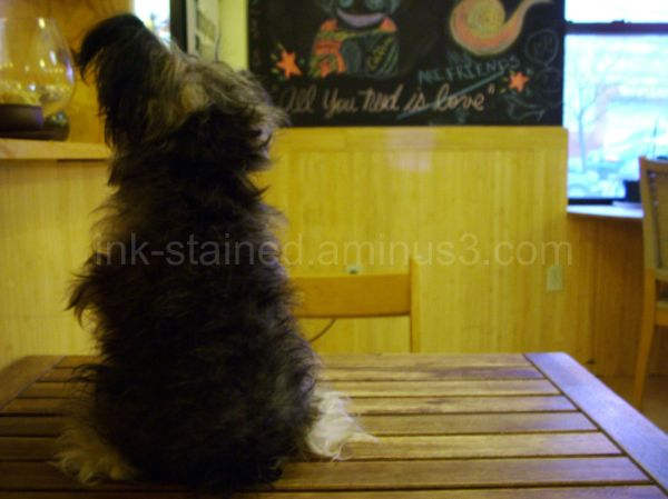 Small dog on table