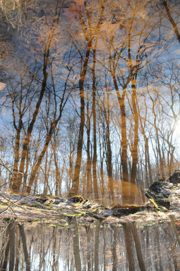 Reflection of the forest above in a calm stream.