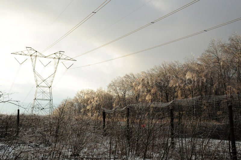 Power lines and trees