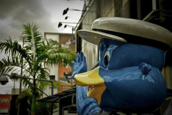 duck, kl, dumb