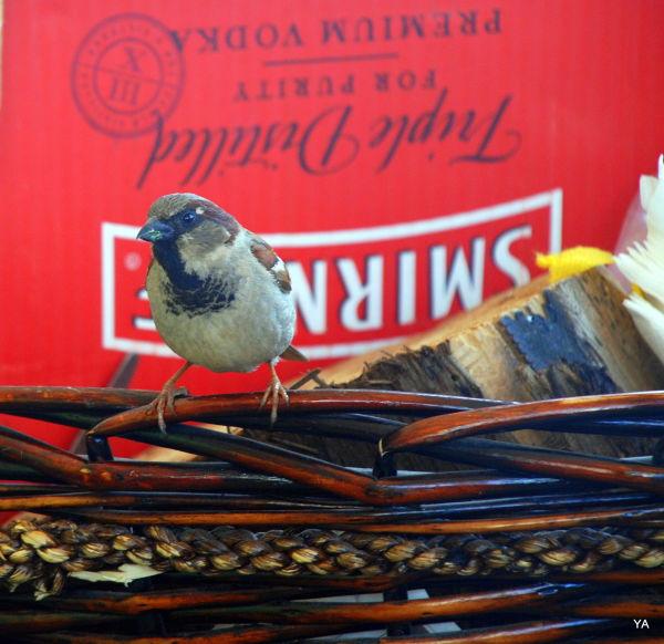 Smirnof  bird