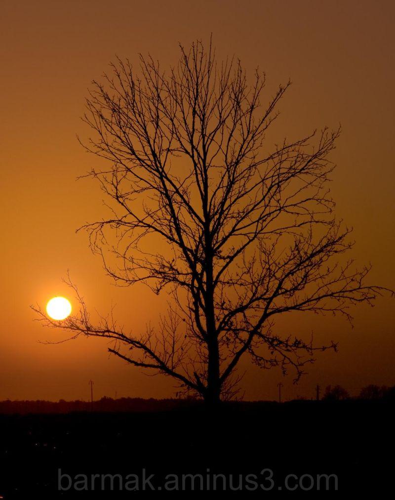 Lightbulb sun