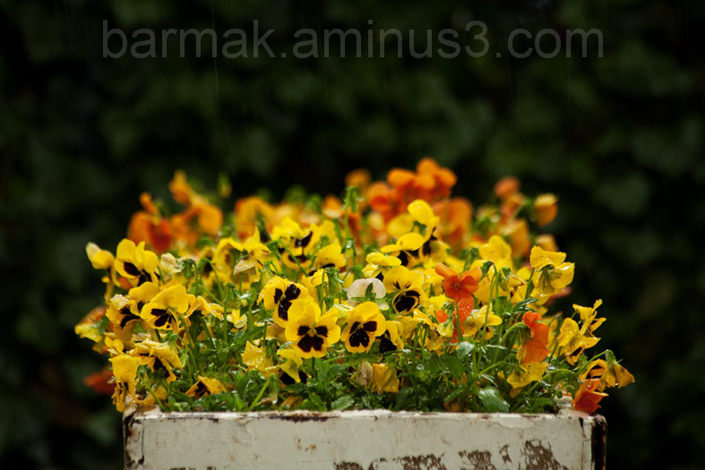 The Flower  Box