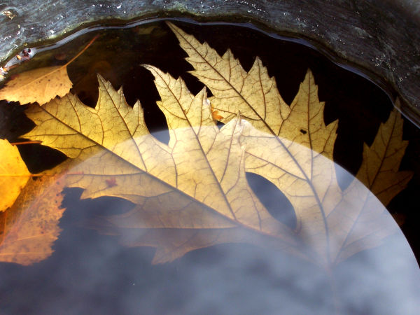 leaves caught in water filled basin