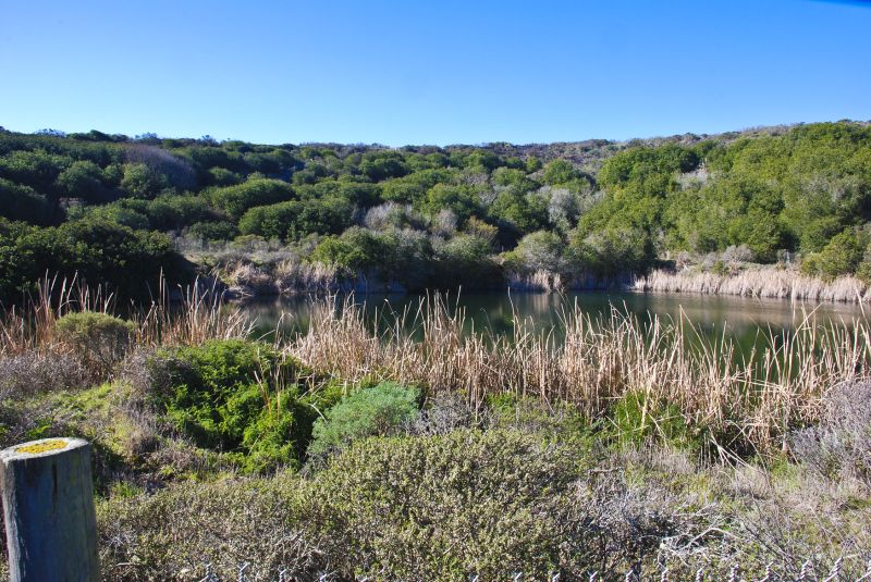 freshwater pond at bodega bay