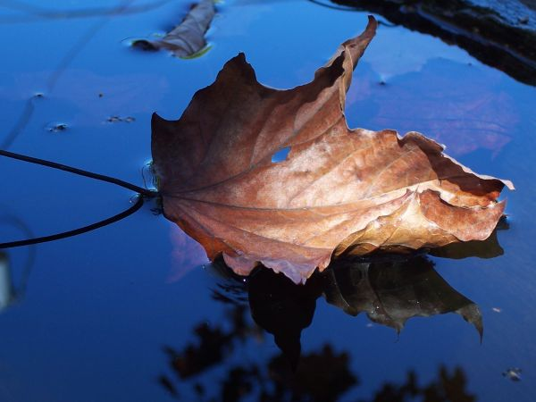leaf floating on water reflected