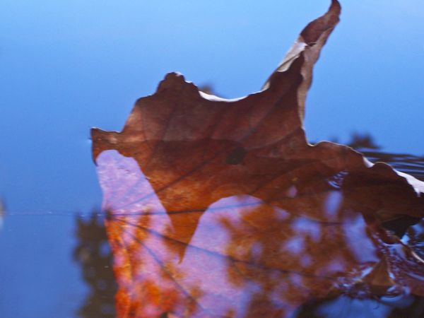 reflections of a sinking leaf