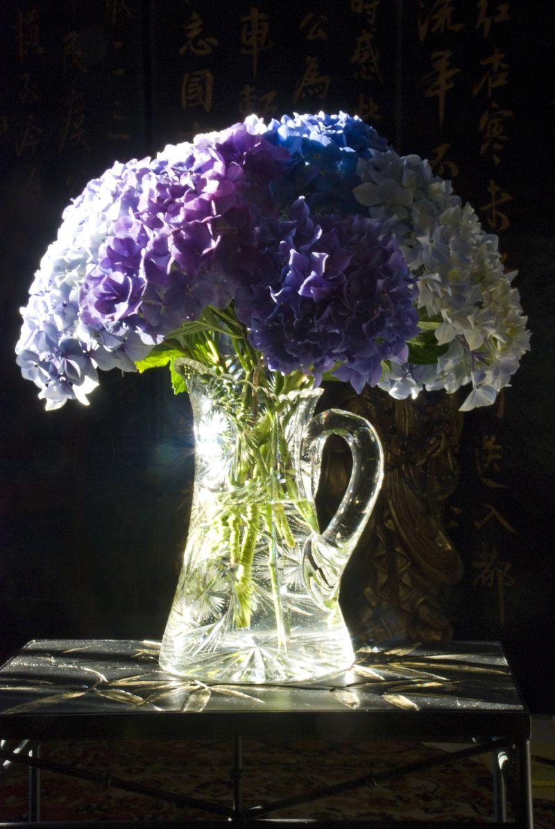 hydrangeas blue purple