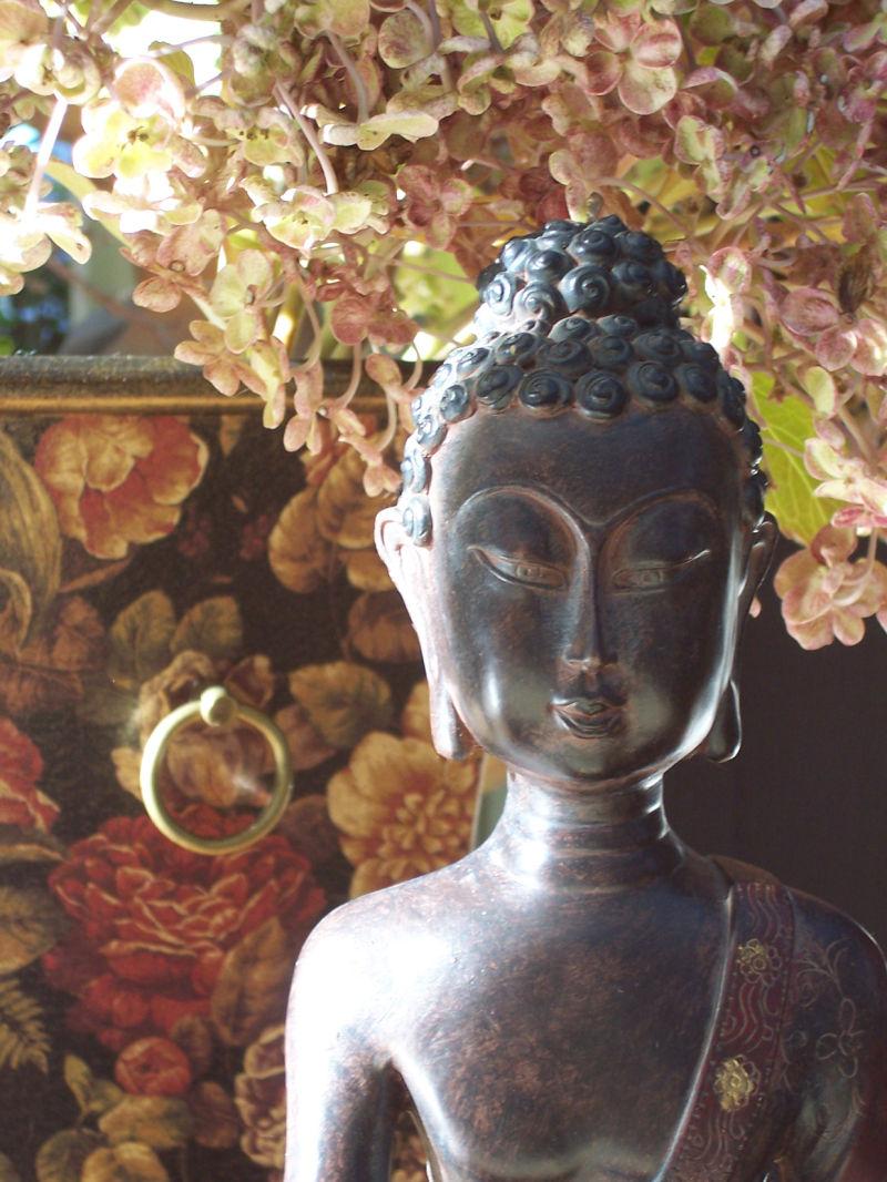 buddha hydrangea