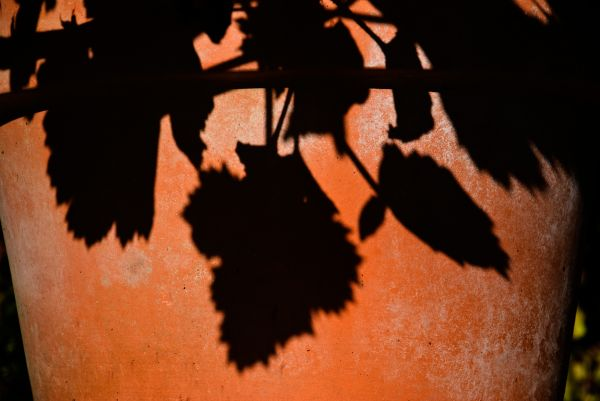 geranium shadow on terra cotta