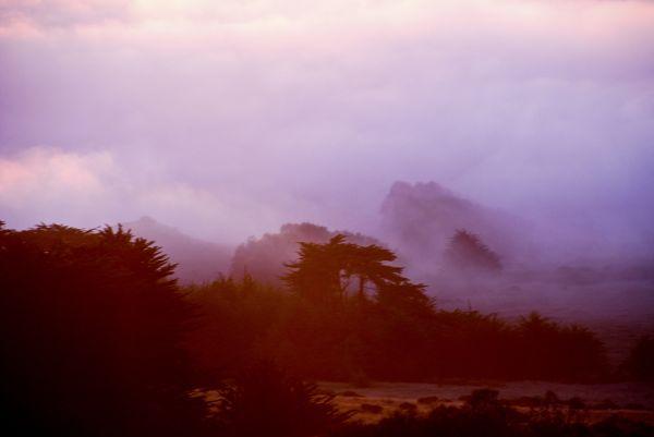 violet fog
