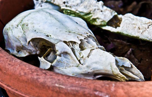 deer skull in flowerpot
