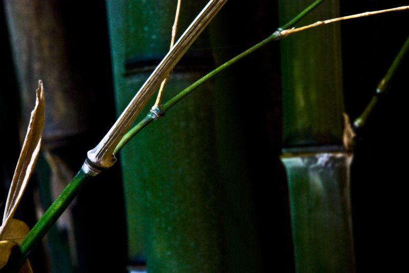 green shadow bamboo