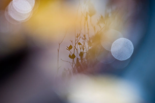 reflection birch blue