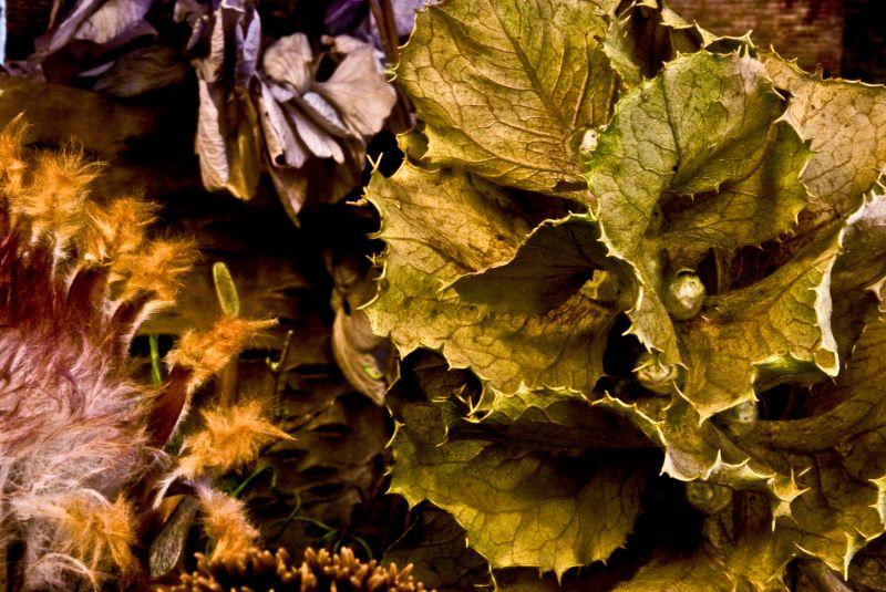 dried foliage